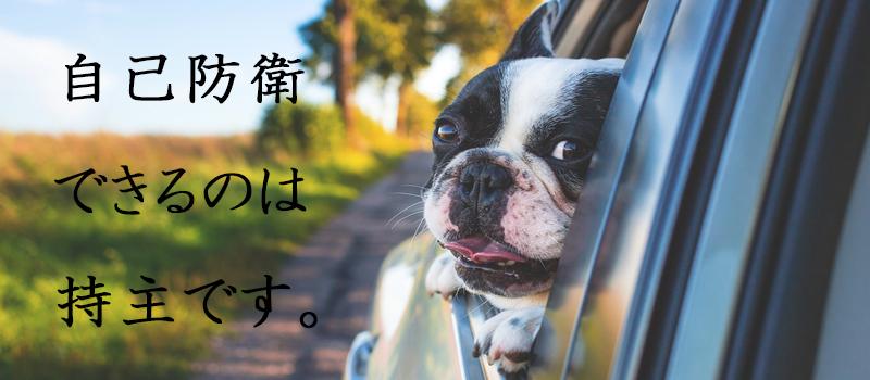 愛車と愛犬